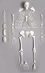 Disarticulated Skeleton